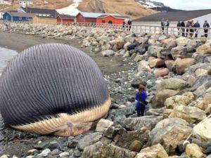 1398894122000-whale